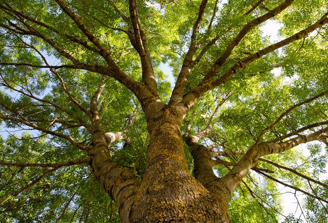 Urban-Tree-tb